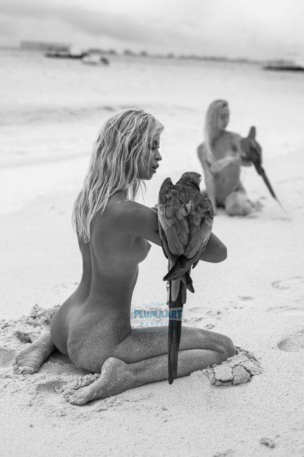 Exotische Papageien A313, Wandbild PlumaArt